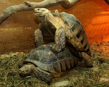 Turtles Doggie Style