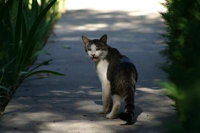 Sassy Kitty