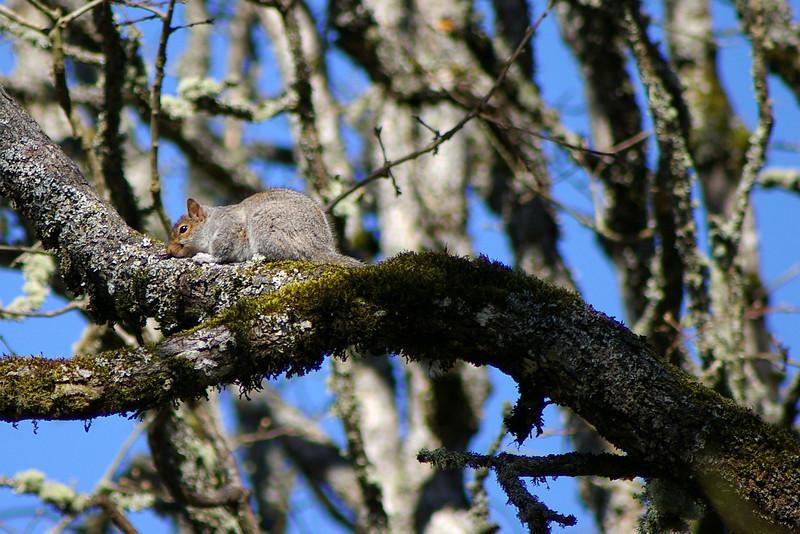 SquirrelBushParkFeb08