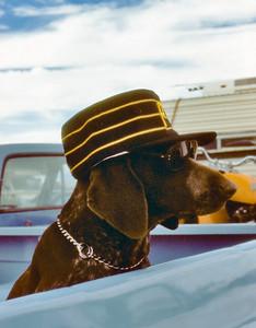 4-12-81 hat dog_1