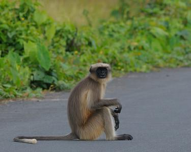 Animals of India