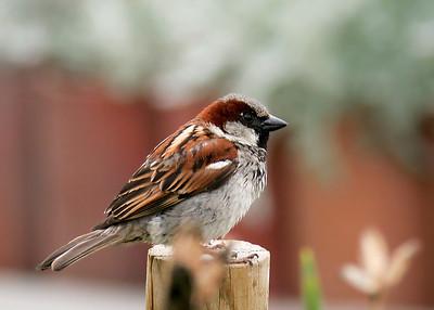 Bird on a post, Monterey, CA