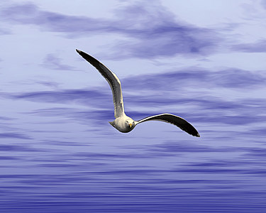 Seagull with spread wings in front of graphic sky