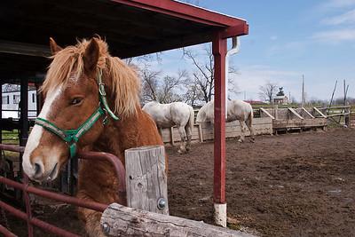 horse, stable, eye, barn, farm