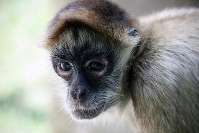 MonkeyFace IMG_0113