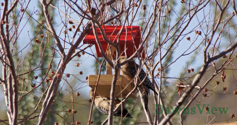 March 2013, Tucson AZ