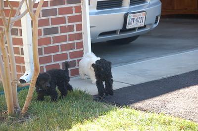 2008_04 (pups)