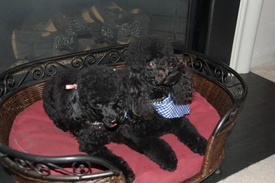 2009_02 Pups