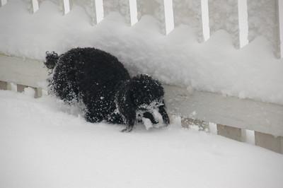 2009_03 Snow Puppies