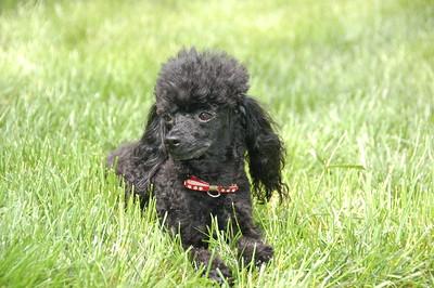 2011_04 Pups