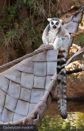 Lemur on Leaf boat 05