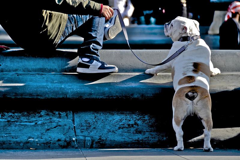 patient bulldog