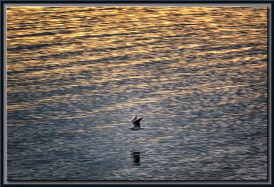 Möwe bei Sonnenaufgang