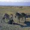 Itchy zebras