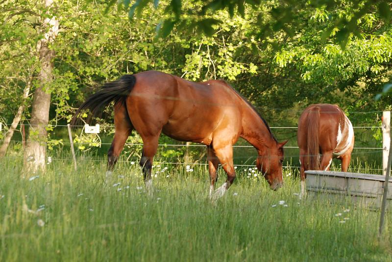 Biltmore Estates Horses