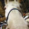 White Horse Nose