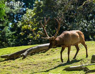 2013_07_27_WoodlandParkZoo-4710