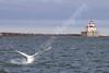 02-04-2012-Swan_Lighthouse-8842