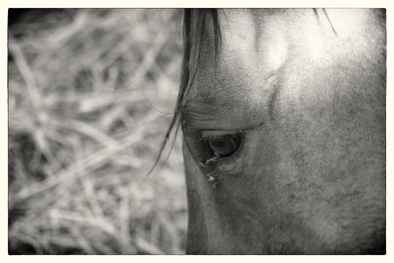 Monochrome, Animal Photos