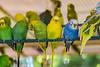 Parakeet Perch