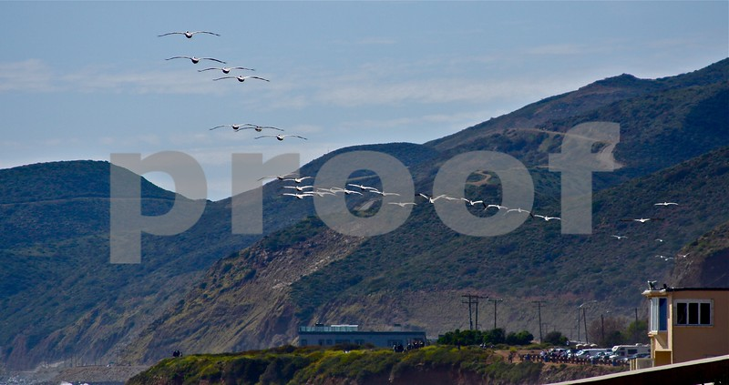 Pelicans in single file formation flying up the Malibu Coast
