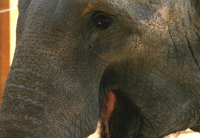 Elephant -3