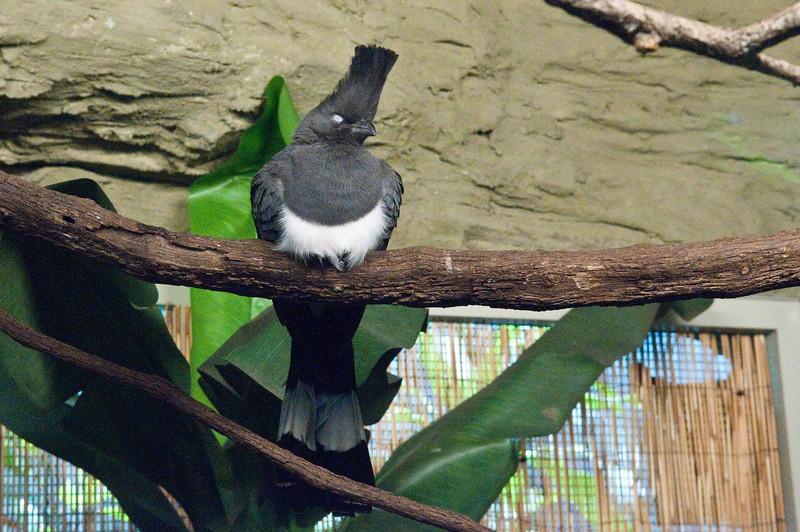 Houston Zoo Hightop Fade
