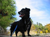 Mitch king of the Mt.