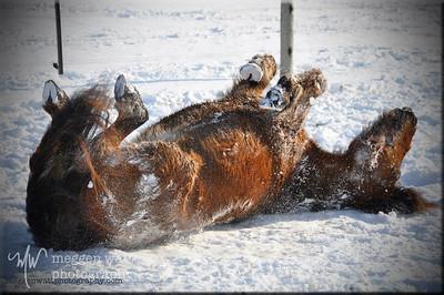 Rän the Icelandic Pony