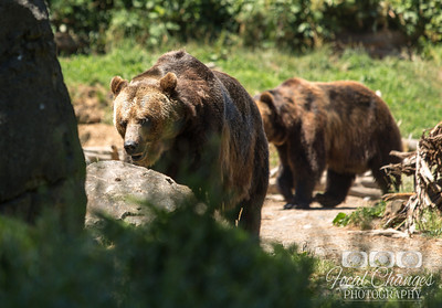 2013_07_27_WoodlandParkZoo-4830
