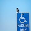 Handicapped Bird