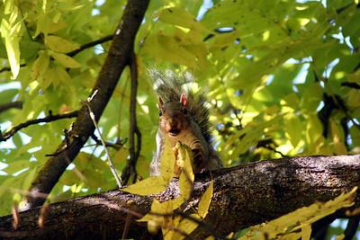 Had a squirrel eating a walnut in my backyard   Oct 2013
