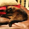 My cat Ozzy