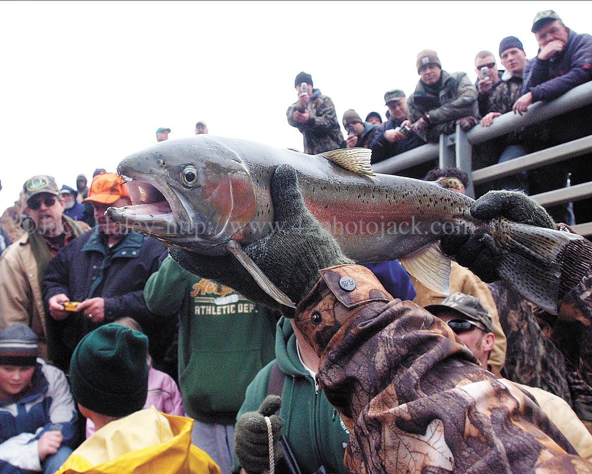 The star of the show, early on was this 27-inch 7.4 pound rainbow trout that Marvin Verna holds up for the crowd to see and photograph.