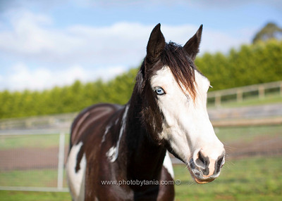 Chance with her stunning blue eyes.  See more photos in the archive