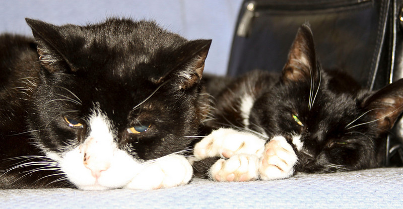 Two Old Cats Resting
