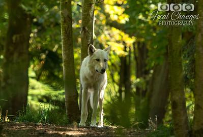 2013_07_27_WoodlandParkZoo-4494