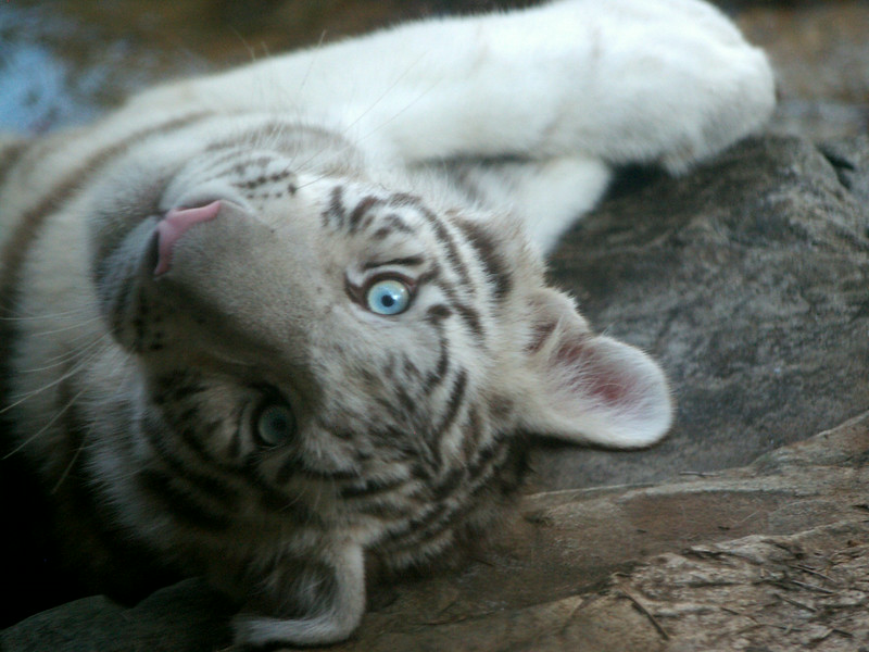Lil Blue Eyes