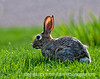 Rabbit; best viewed in the largest sizes