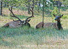 Elk; best viewed in the largest sizes
