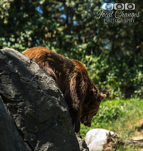 2013_07_27_WoodlandParkZoo-4799