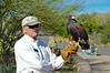 Harris's Hawk and Docent