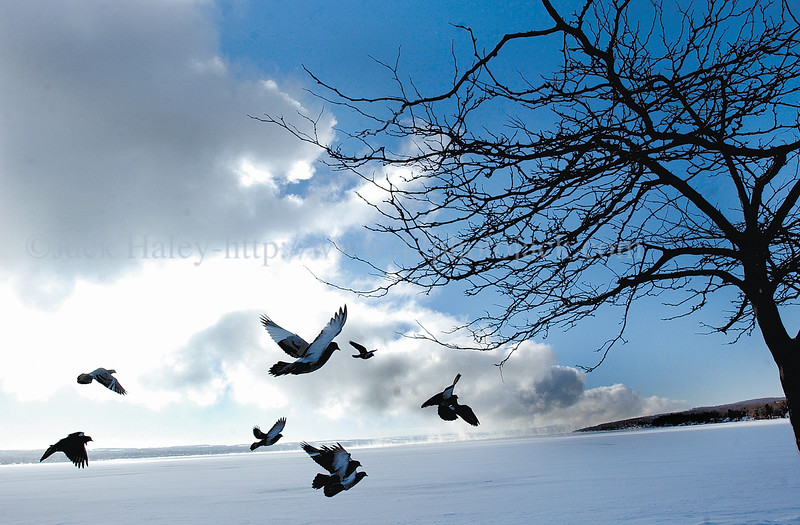 jhpigeoncloud - Pigeons fly around Canandaiuga Lake as  a huge finger lake shape cloud heads in a northlery direction on Friday.