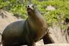 Amanda's Sea Lion