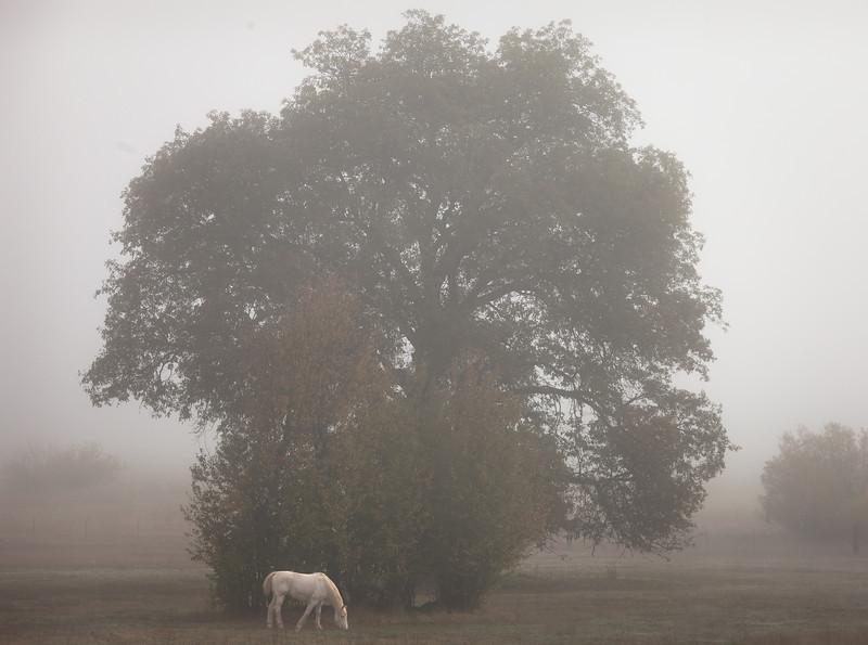 White Horse in Fog
