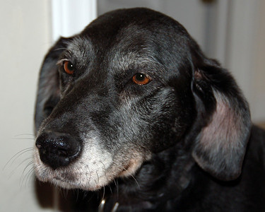 RIP Dakota. Age: Approximately 14 years. Died October 18, 2007 You will be missed.
