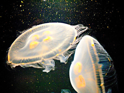 Space ship jellies