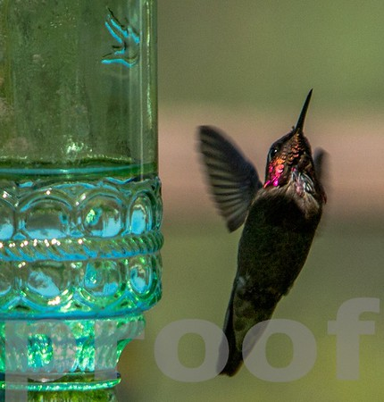 """Taking off after a drink at the """"bar"""""""