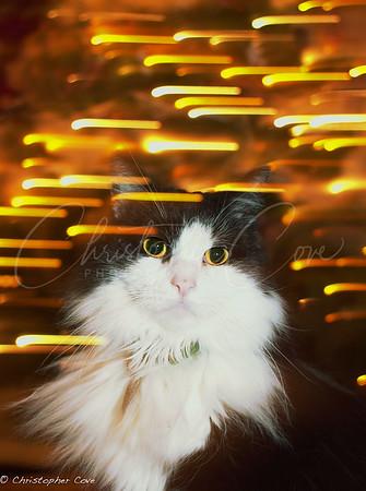 Tux lights