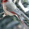 Cardinal, AZ